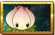 Power Lily New Premium Seed Packet