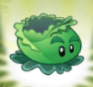 Cabbage-pultPF