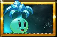 Ice Bloom Premium Seed Packet