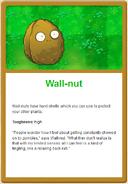 Walln-ut online