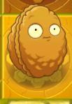Wallnutongold