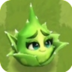 Aloe Vera3