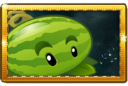Melonpulta Paquete de Semillas Premium