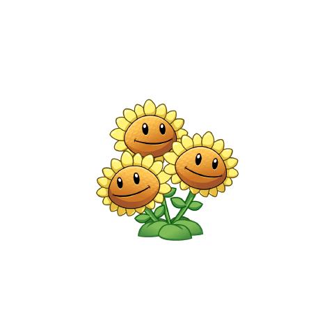 Triplet Sunflower HD