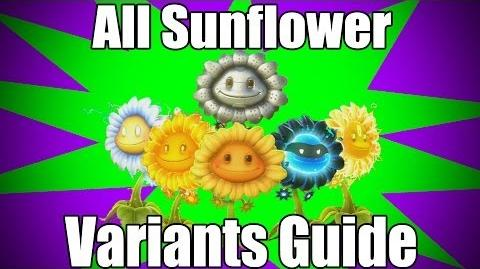 All Sunflower Variants Guide