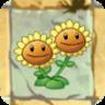 7 Twin Sunflower