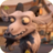 Stinky GoatGW2