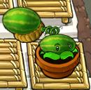 Melonpult zengarden