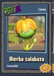 Hierba Calabaza - Comun