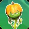 Pumpkin WeedGW2