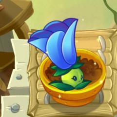Moonflower được nâng cấp trong <a href=