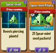 Spear-mint and Spear-mint Seed Packets in Store