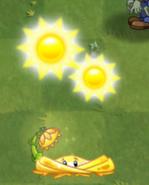 Shine Vine sun produce