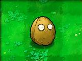 Wall-nut (PvZ)