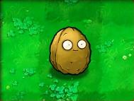Wall-nut-Almanac