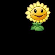 Sunflower Giving Sun