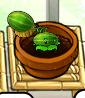 Smallmelon