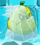FrozenSquash