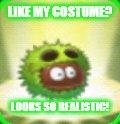 Small Chestnut Team Meme