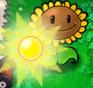 Sunflower Producing Sun3