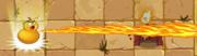 Fire Gourd PF