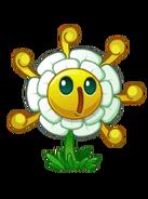 Golden chry