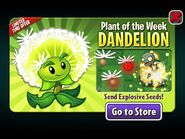 DandelionPlantoftheWeek