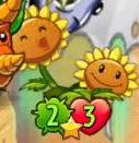 TwinSunflowerabouttoattack