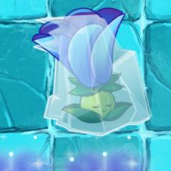 Moonflower chưa tăng sức mạnh tối đa bị đóng băng
