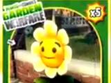 Uzdrawiający kwiat (Roślina)
