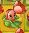 Tuliponagoldtile