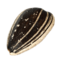 Sunflower seeds PNG12