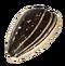 Sunflower seeds PNG12