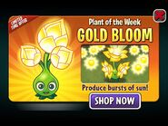 GoldBloomPlantoftheWeek
