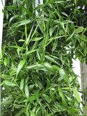 800px-Gardenology-IMG 4811 hunt10mar