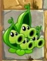 Pea Pod 4