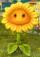 Sunflower (Class)