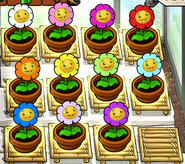 All zen garden marigold colors