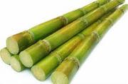 Sugarcanes