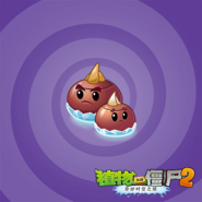 Curling Corms reveal image
