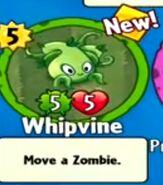Receiving Whipvine