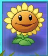 SunflowerSun
