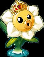 HD Narcissus Concept