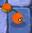 Orangepulto.o