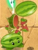 Melon pult lobbing a melon