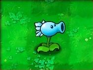 Snow-Pea