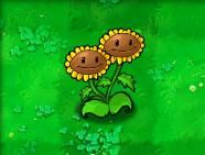 File:Twinsunflower1.jpg