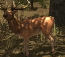 Deer (Legacy)