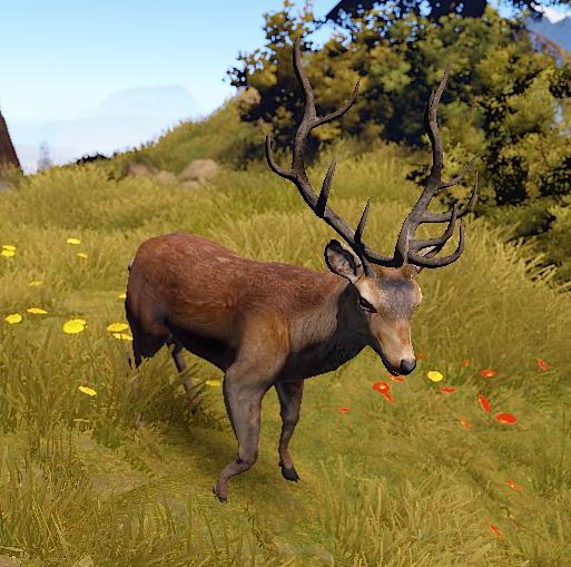 Deer (Main) | Rust Wiki | FANDOM powered by Wikia