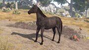 Horse Black View